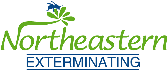 Bed Bug Exterminator In Brooklyn And Pest Control Experts
